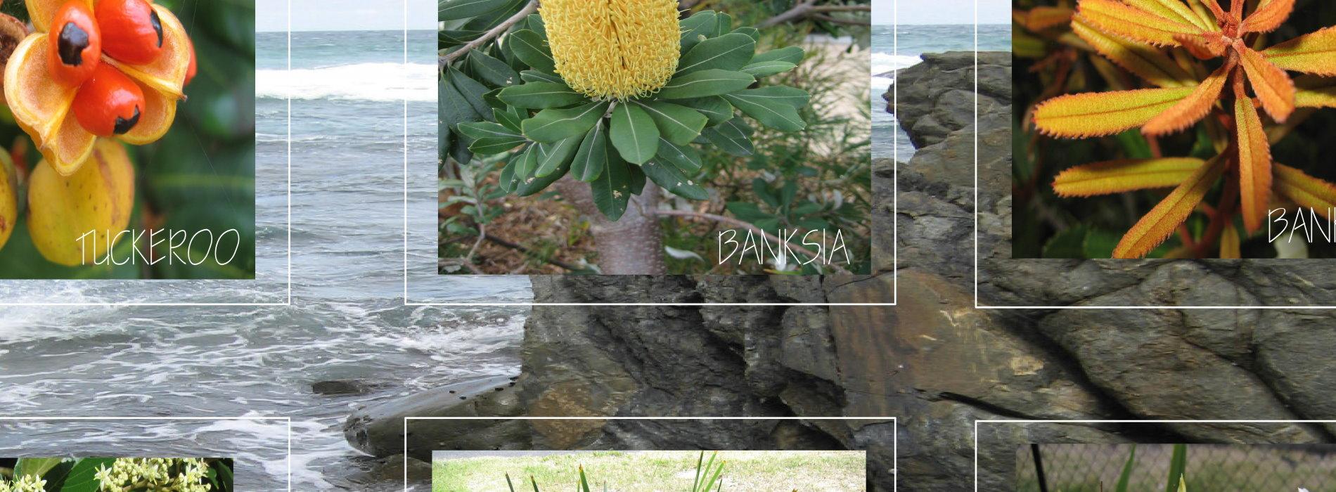 landscape proposal cover page